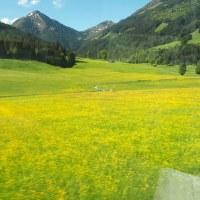 Grünlandberatung verdoppelt Ertrag und  Eiweiß
