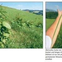 Ampferbekämpfung – die jährliche Routine für hochwertiges Wiesenfutter