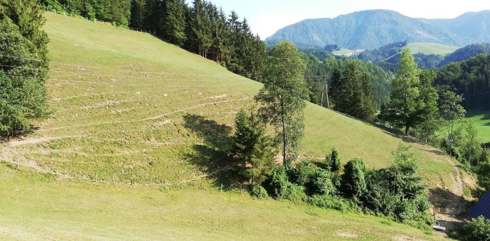 blaimauer-trockenheit-wiesenschu00e4den-whatsapp-image-2019-07-26-at-17.35.52