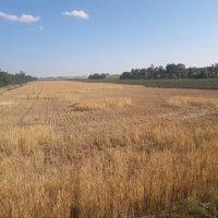 Wenn Mäuse Weizen Felder leer fressen /  Spätfolgen schädlings-fördernder Agrarprogramme?