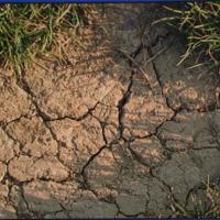 Regeneration  trockenheitsgeschädigter  Futterwiesen nach den Regenfällen 2020